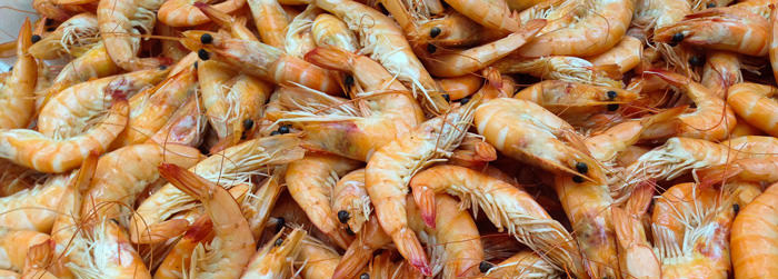 Commerce eliminates exclusion of dusted shrimp from antidumping duties